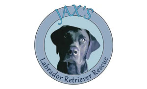 Jax's Labrador Retriever Rescue