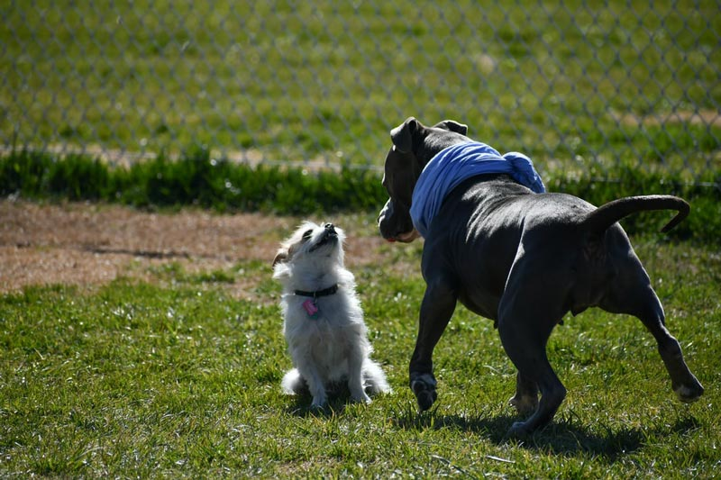 Dogs at Park